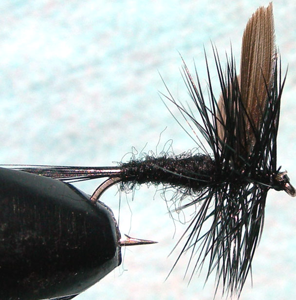 Black Gnat trout fly