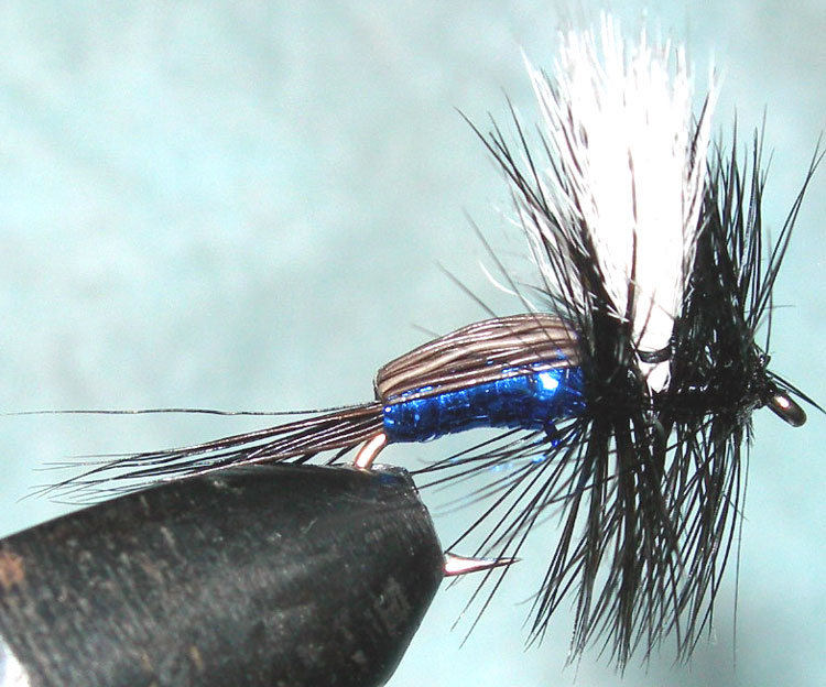 Nz blue blowfly