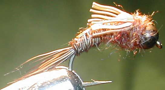 Cadillac Pheasant Tail Blackbead trout fly