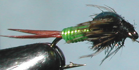 Copperjohn lime trout fly