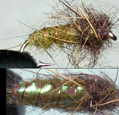 Electric Caddis Olive trout fly