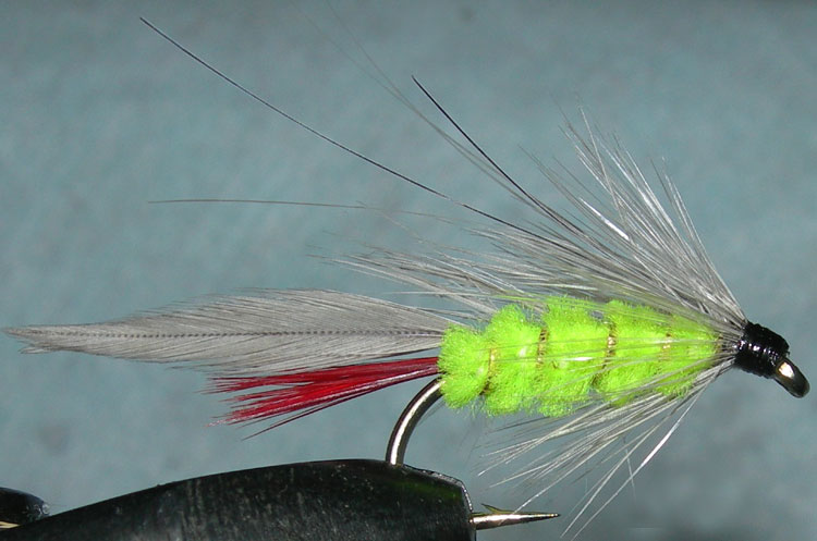 Gray Ghost fluorogreen trout fly