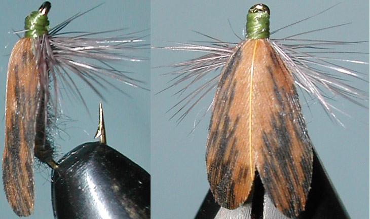 Lacewing Moth pheasant trout fly