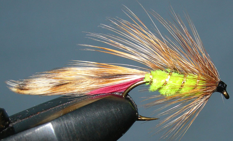 Parsons Glory fluorogreen trout fly