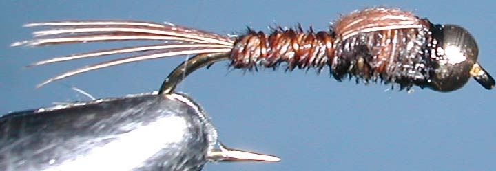 Pheasant Tail Kiwi Goldbead trout fly