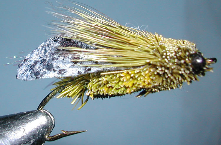 SuperCicada trout fly